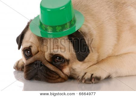 St Patricks Day Pug