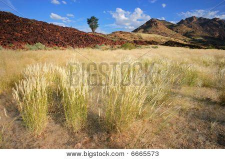 Grassland Landscape, Namibia, southern Africa
