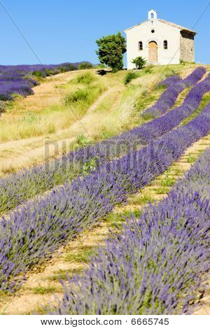 chapel with lavender