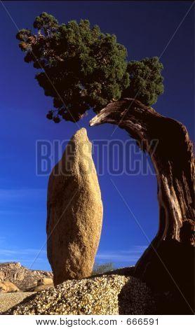 Juniper Rock