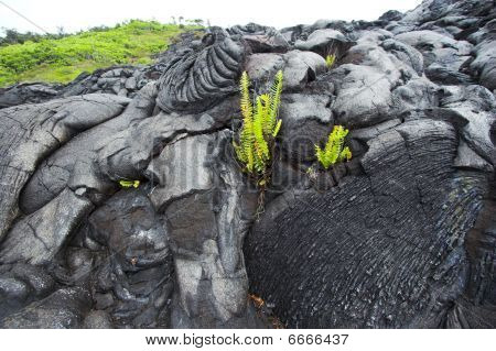 Lava Close-up And A Plant