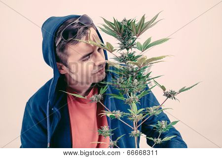 Man Smelling Cannabis Plant