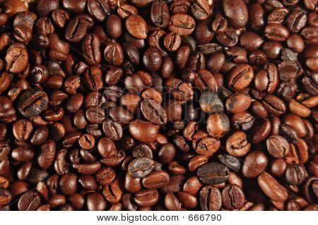 Grãos de café 01