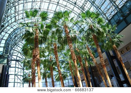 Tropics Under Glass