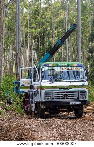 ELLA, SRI LANKA - MARCH 2, 2014: Timber industry workers in front of the truck. Deforestation is one of the biggest environmental problems in Sri Lanka.