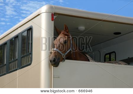Horse In The Trailer.