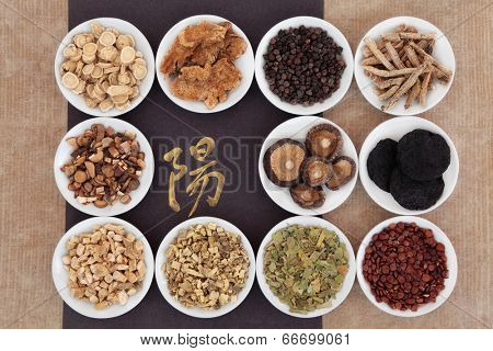Yang herb chinese herbal medicine selection with calligraphy script over paper background. Translation reads as yang.