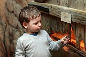 stock photo of terrarium  - Boy watching the insect in terrarium at zoo