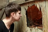 stock photo of terrarium  - Woman watching the insect in terrarium at zoo