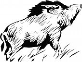 pic of wild hog  - stylized silhouette wild pig - JPG