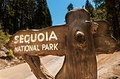 stock photo of sequoia-trees  - Sequoia sign entry in national park california