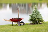 stock photo of manicured lawn  - Planting an ornamental evergreen cypress or conifer on the bank of a tranquil lake with a wheelbarrow full of potting soil or manure and a spade standing on the manicured lawn - JPG