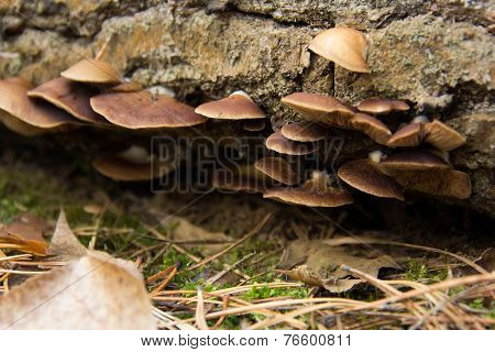 Closeup of wild mushrooms