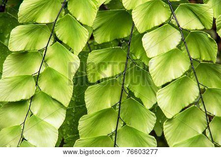Beautiful Tropical Green Plant
