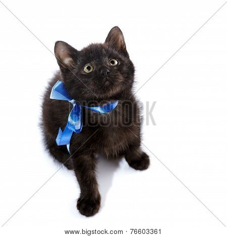 Black Small Kitten With A Blue Bow.