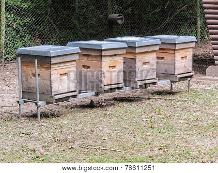 A Line Of Beehives - National