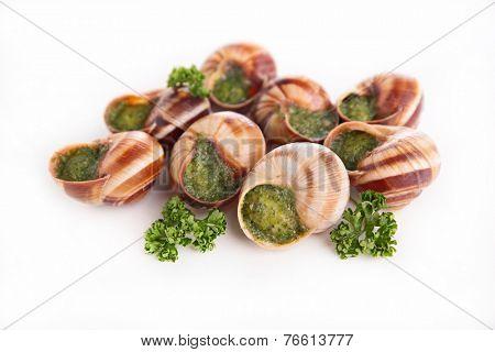 bourgogne snail