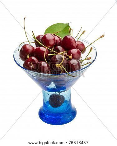 Gean - Cherry