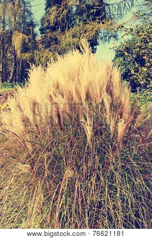 Clump Of High Grass