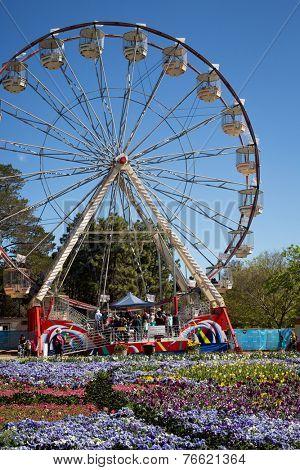 CANBERRA, AUSTRALIA - OCTOBER 1 2014: Tulips at Canberra's Floriade Festival, Australia's biggest celebration of Spring.
