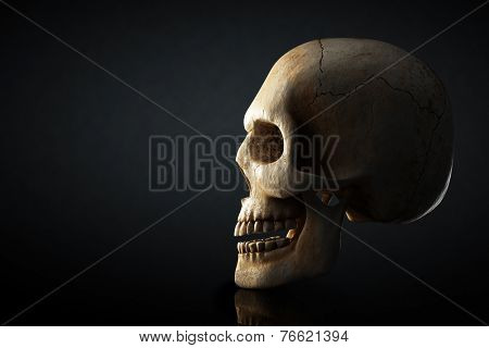 Human skull still life with side view on dark background - 3D artwork