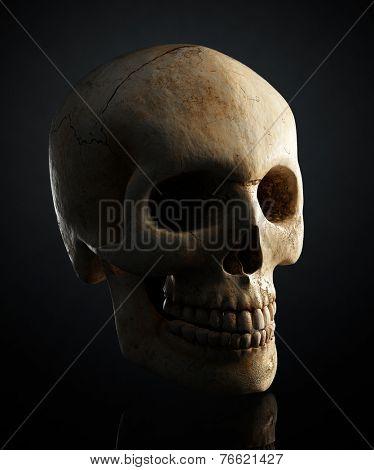 Human skull still life on black background - 3D artwork