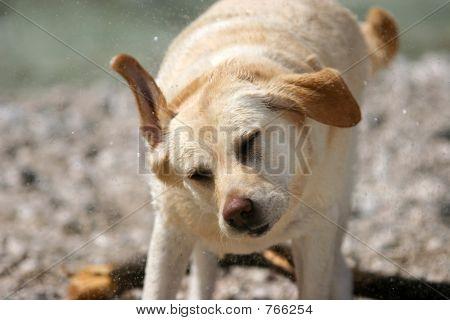 Hund shake
