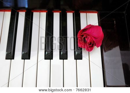 Top View Of Rose On Keyboard