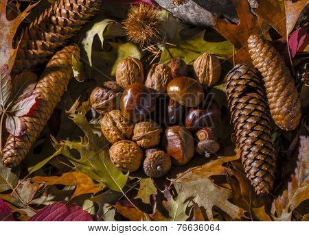Autumnal still life composition