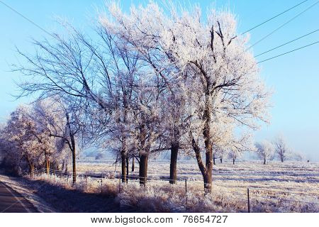 Trees with winter frost and ice
