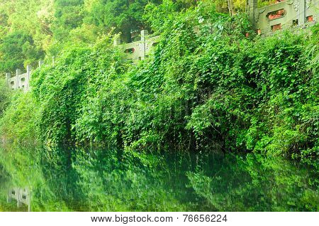 Reflecting Vegetation