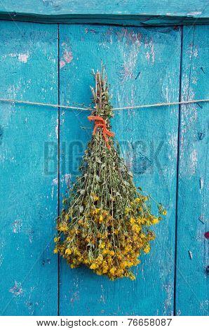 Summer St Johns Wort Medical Flower Bunch