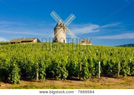 vineyards with windmill near Chénas Beaujolais Burgundy France