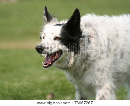 a cute dog in the grass at a park during summer