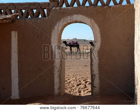 Camel As Seen Through Gate