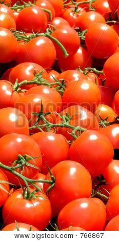 Tomato Vertical