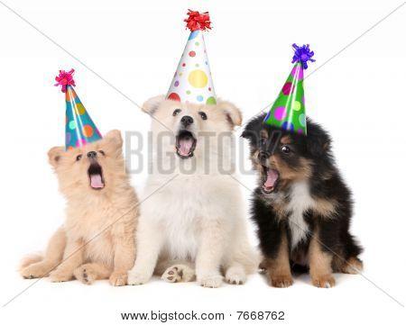 Cachorros cantando la canción de feliz cumpleaños