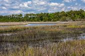 image of marsh grass  - swamp and marsh grassed in the tidewater area near Swansboro, North Carolina
