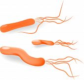 pic of gastritis  - Bacteria Helicobacter pylori is a Gram - JPG