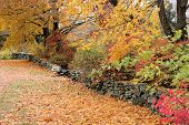 stock photo of stonewalled  - Long stonewall bordered by trees in their autumn colors