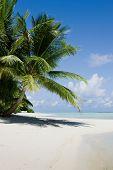 picture of kuramathi  - Green tree on white sand beach - JPG