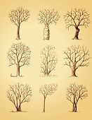 stock photo of bonsai tree  - Hand drawn trees isolated sketch vintage style trees set - JPG