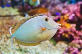 picture of coral reefs  - Fishes and corals reef in aquarium  - JPG