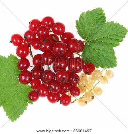 Currant Fruit