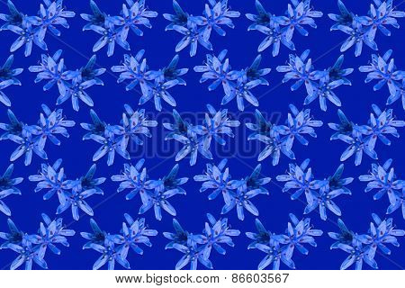 Flowers Blue Snowdrops Pattern Background