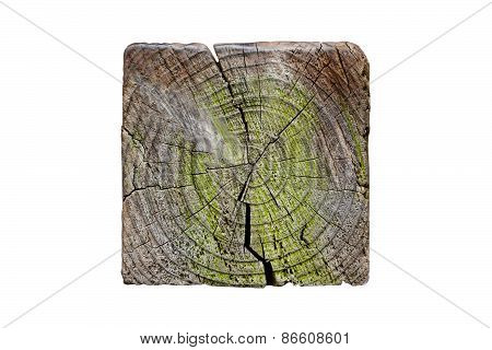 Cross Section Of Square Tree Trunk