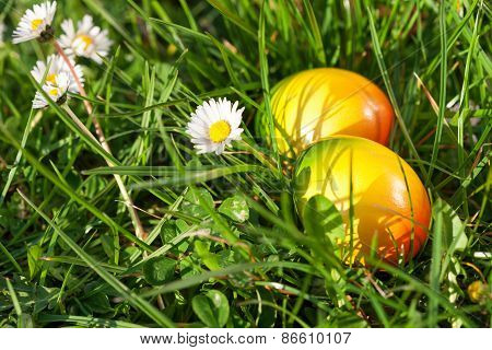 Easter Eggs hidden in green grass