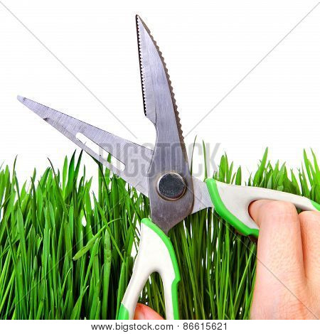 Shears On The Grass