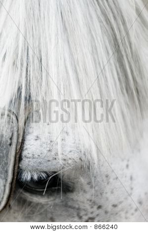 Horse head closeup