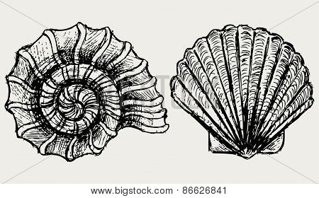 Sea snail and scallop shell
